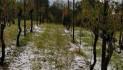 Nelle vigne e in risaia sembra inverno (photogallery di una grandinata)