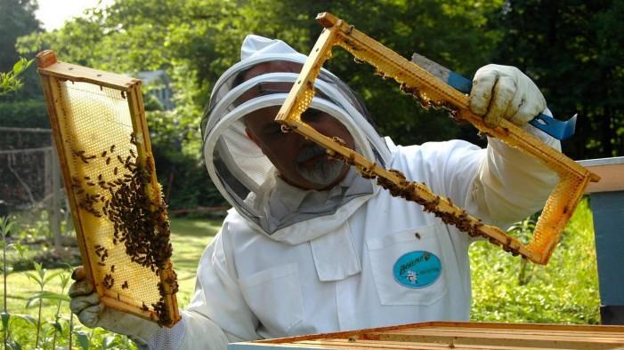 Emergenza Covid: 9,6 milioni a floricoltori, apicoltori e allevatori da carne