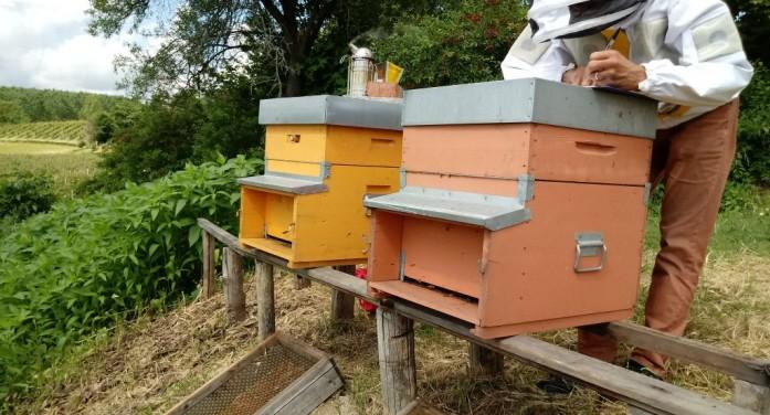 "Clima, furti, pesticidi. ""Annus horribilis"" per il miele"