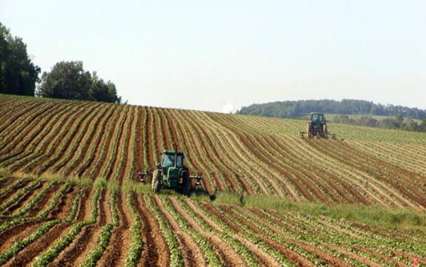 Psr: pagati 639 milioni agli agricoltori piemontesi