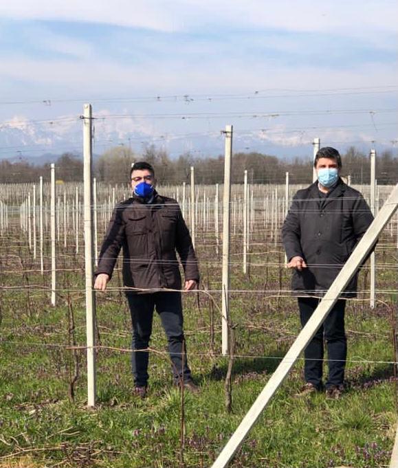 """""""Rinviare gli estirpi di un anno per salvare i viticoltori stremati"""""""