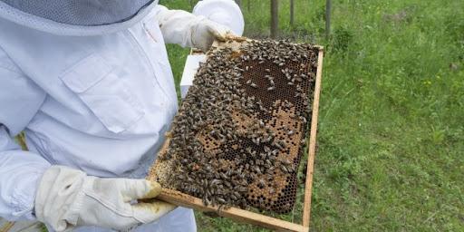 Emergenza api per il gelo, rischiano di morire di fame