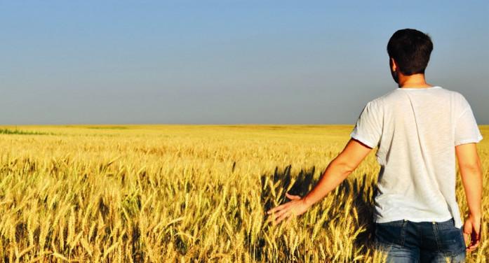 Psr Piemonte, liquidato il 95 per cento agli agricoltori