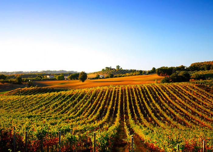 Aiuti (5,8 milioni) ai viticoltori piemontesi per riconvertire i vigneti