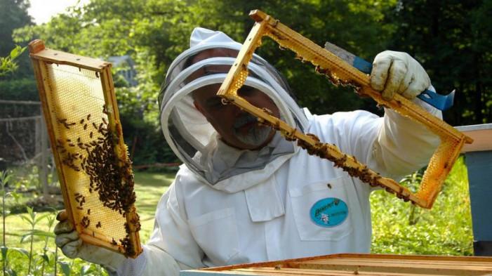 """""""Urge intervento straordinario per salvare gli apicoltori"""""""