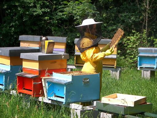 Risorse assegnate agli apicoltori del Piemonte, regione leader