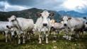 """""""Promuovere il latte piemontese per contrastare la crisi"""""""