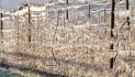 Un milione e mezzo agli agricoltori per riscaldare vigne e frutteti